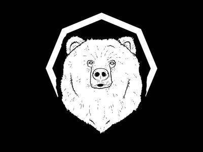 Bear illustration animal drawing mark icon sketch bear