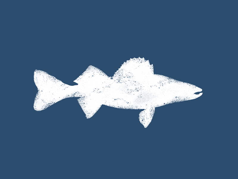 Walleye outdoors adventure design apparel texture fishing fish trout walleye