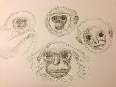 Exploratory Gibbon Sketching