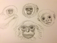 Exploratory Gibbon Sketching