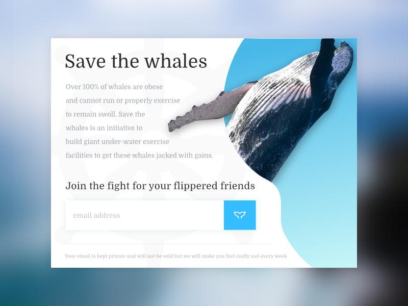 Daily UI Challenge 1 web design ui design ux design user experience whale blue ui design challenge ui ux web web-design