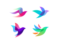 Colorful Bird Session