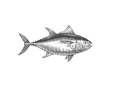 Tuna etched fish tuna restaurant package label logo food icon hand drawing pen and ink etching vector engraving engraving