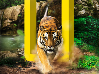 National Geographic - Digital Campaign