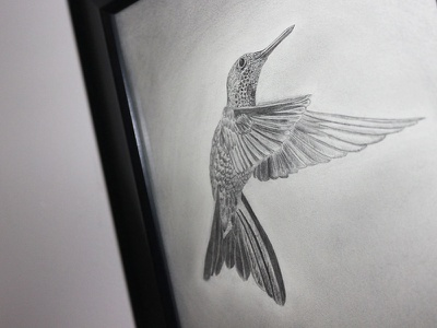 Hummingbird sketch ✏ graphite & charcoal art fine drawing monochrome bird sketch pencil