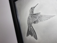 Hummingbird sketch ✏ graphite & charcoal
