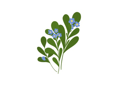 Pretty Weeds - Speedwell plants outdoors leaves colour vector hand drawn pretty weeds garden nature flowers illustration bold colour flat illustration floral botanical illustration botanical illustration