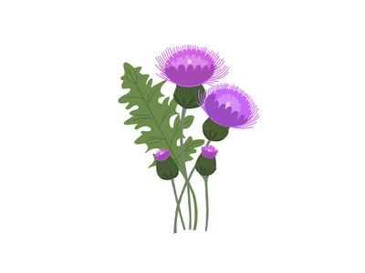 Pretty Weeds - Thistle purple flat illustration hand drawn floral illustration floral flowers vector pretty illustration thistle bold color leaves outdoors weeds botanical illustration botanical nature plant colour bold