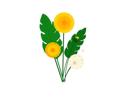 Pretty Weeds - Dandelion garden hand drawn vector pretty weeds leaves plants outdoors nature flowers floral design flat illustration botanical illustration botanical botanical art colour bold