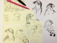 WIP birds