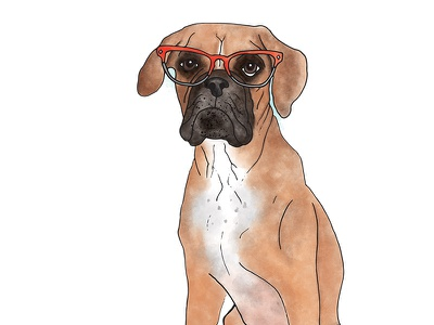 Abby the Boxer dogs with glasses boxer dog illustration