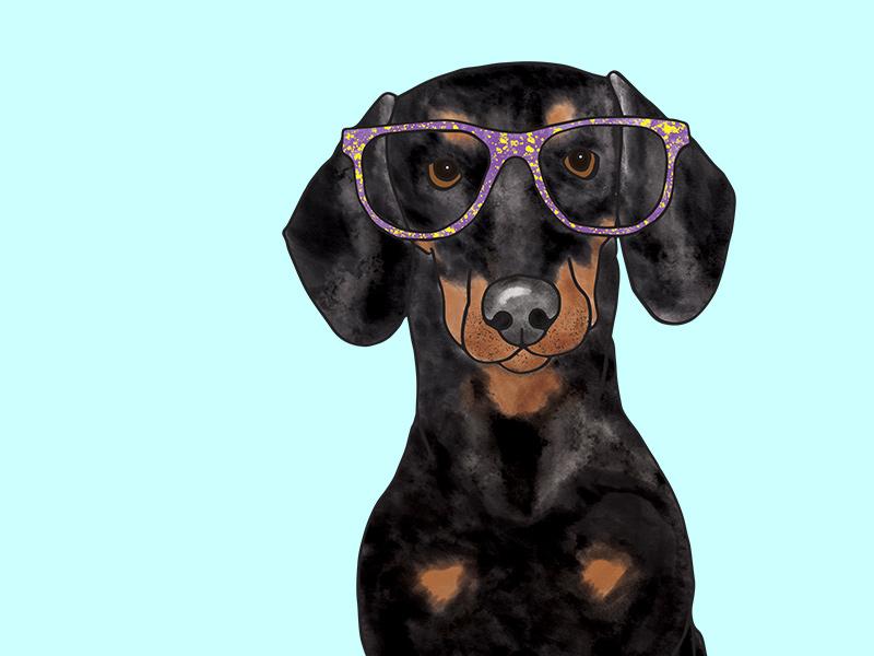 Dachshund Pet Portrait Illustration digital art digital artist illustration art graphic art design drawing dog art dog illutration cute dog
