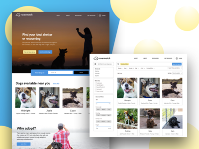 Rovermatch Dog Adoption non-profit adoption web filters search branding