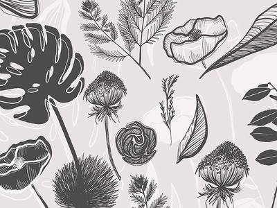 Botanical Garden Illustration Vector Set