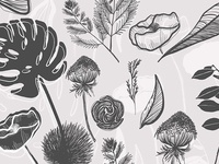 Botanical Garden Illustration Vector Set
