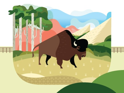 Buffalo buffalo colorado flatirons boulder trees grass animal illustration clouds