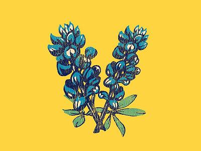 Vandoliers Bluebonnet V vandoliers texas flower blue yellow graphic tshirt illustration bluebonnets bluebonnet
