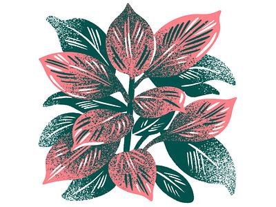 Calathea Plant screenprint silkscreen limited palette limited color plant houseplant calathea illustration