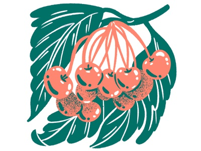 Two Color Cherries texture food spot spot illustration foliage botanicals food illustration fruit illustration fruit drawing fruit silkscreen illustration cherry cherries