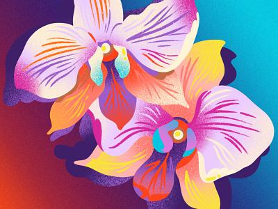 Orchids & Gradient editorial editorial illustration pattern art houseplant summer tropical flower tropical blossom flower flowers orchids noise gradient drawing jordan kay texture illustration