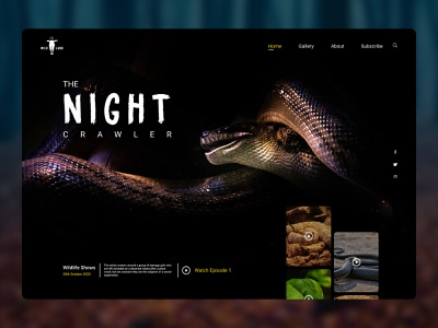 Wildlife Shows Landing Page safari ux ui wilderness modernism dark theme national geographic zoo dribbble best shot adventure nat geo website design web wild animals landing page ux design ui design snakes wildlife animals