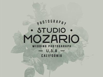 Wedding Font Pairing photography studio badge logo typography type font wedding font photograhy photography logo wedding photography wedding fonts wedding invitation wedding invite wedding card wedding