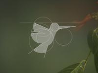 Colibri [CONSTRUCTION]
