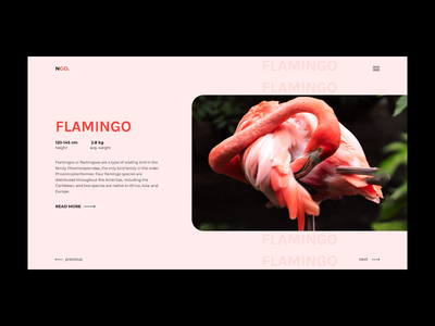 Flamingo animals animal flamingo website web design web exploration ui ux minimal design concept