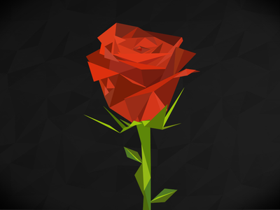 Rose rose illustration flower
