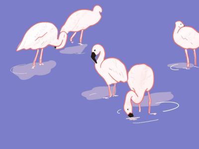 Birds of a Feather digital sketch ipad wildlife purple nature birds flamingo