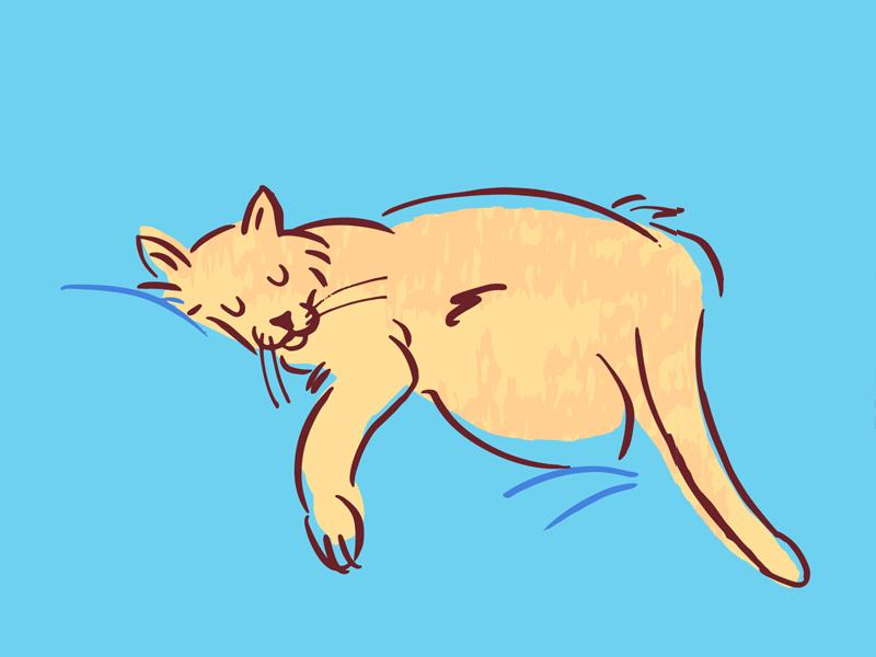 Sleepy Cat Positions cat illustration cats kitty kitten cat cartoon animals cute illustration vector
