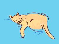 Sleepy Cat Positions