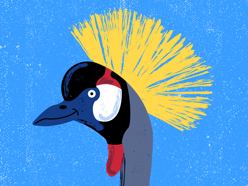 Grey Crowned Crane feathers feather grey crowned crane cranes crane birds bird cute vector illustration illustrator
