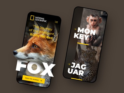 National Geographic Mobile exploration concept national geographic header layout webdesign minimal clean photoshop web responsive ux website ui design drawingart