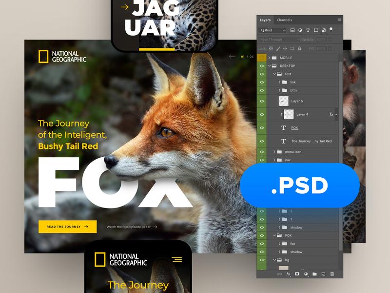 National Geographic PSD freepsd freebie free psd layout webdesign minimal clean photoshop web responsive ux website ui design drawingart