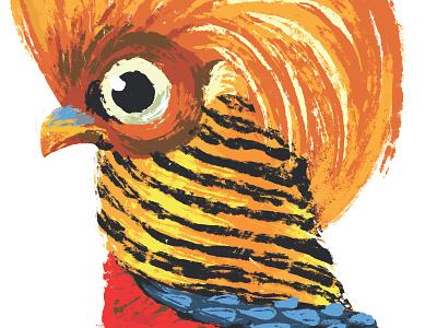 Golden Pheasant brushes bird golden pheasant