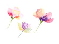 Logo Explorations - A Summer Flower