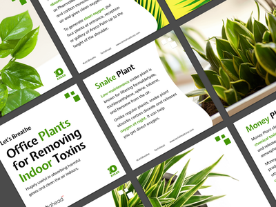 Office Plants for Removing Indoor Toxins freshair letbreathe breathe airquality pollution indoorplants
