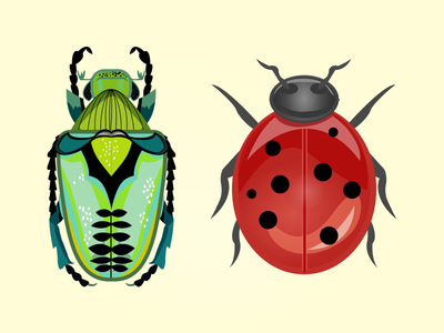 bugs digital illustration digital art digital icon design vector flat illustration fly ladybug animals beetle insects insect bug bugs