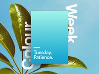 Tuesday - patience