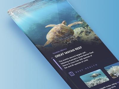 Creative Jam 2020 Reefstar mockup mobile mobile app mobile ui turtle coral reef blue ocean coral creative jam design ux education app adobe xd ui