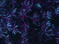 Iphonebg purplehaze