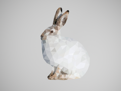Poly Hare mountain hare low poly triangulation delaunay polygon poly