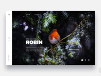 Discovery beautiful animals    daily ui challenge 33 365