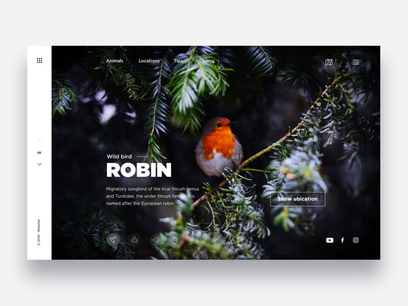 Discovery beautiful animals  - Daily UI Challenge 33/365 discovery animals photo interaction design user interface user experience ux design ui design ui ux app animals