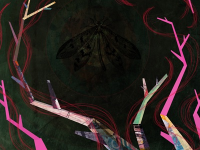 Trapped moth sketch