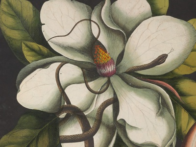 Blooming Festival 2020 botanical art surealism floral botanic art illustration graphicdesign design