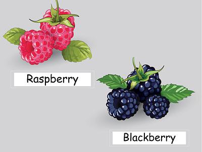 Raspberry blackberry fruit summer cartoon healthy food card design illustration art blackberry raspberry