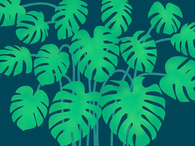 Monstera Plant illustration