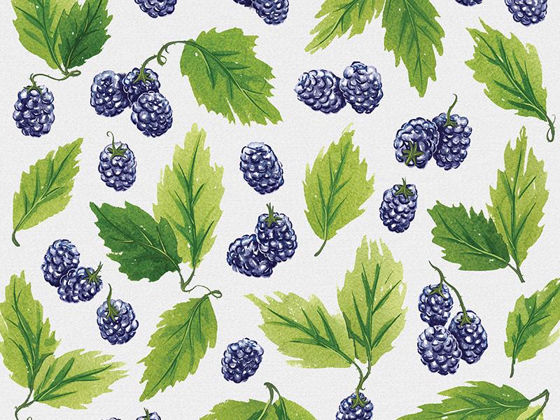 Watercolor blackberries